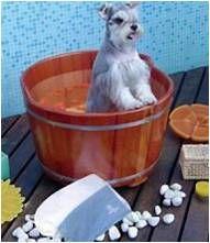 Banho e Tosa - Estética Animal