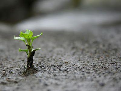 O que estamos cultivando?