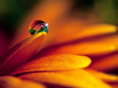 A importância dos florais na atualidade.